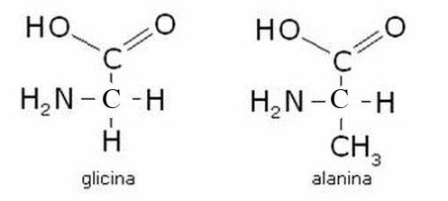 Glicina Alanina